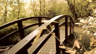 Footbridge over stream and fall leaves dolly shot