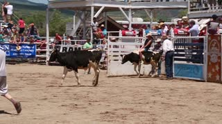 girl calf riding at childrens rodeo