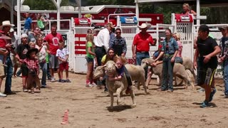 girl riding sheep in kid rodeo