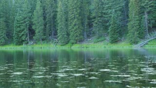 Gorgeous reflection in the mountain lake water with bugs