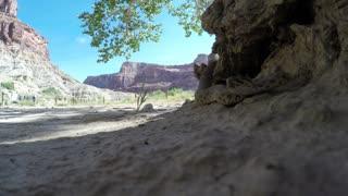 Great Basin Rattlesnake in desert in Utah