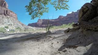 Great Basin Rattlesnake slithering in desert of southern Utah