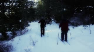 group cross country skiing in forest