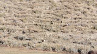Herd of deer on mountain