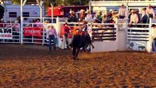 Horse Falls During Rodeo with Cowboy