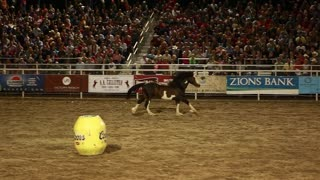 horse running slow motion in a rodeo