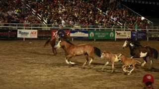 horses running in slow motion at a rodeo