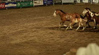 horses running slow motion at a rodeo