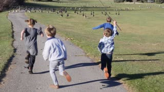 Kids chase flock of Canadian geese in park
