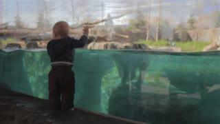 little boy watching polar bear swimming slow motion