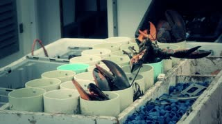 lobsters on a fishing boat