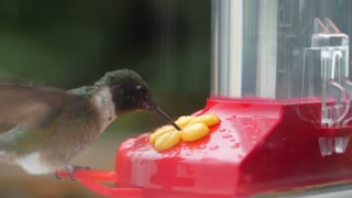 Macro of a hummingbird eating nectar from a feeder