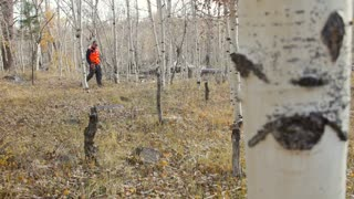 Man hunting with his rifle in the aspen trees