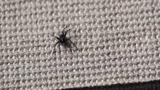 Man squishes spider