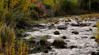 Mountain River with Fall Leaves Dolly Shot