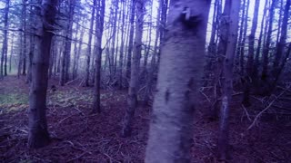 Moving through dead tree forest