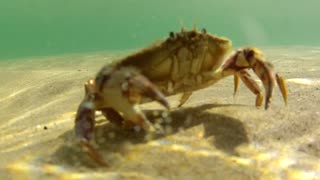 Ocean Crab on the Sea Floor