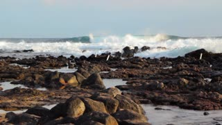 Ocean waves crashing on lava shoreline