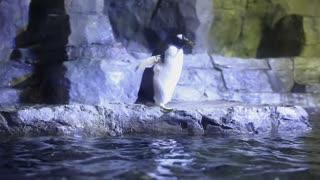 penguin swimming in a large aquarium tank