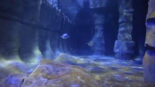 penguins swimming in a large aquarium tank