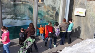 people looking at the aquarium in the zoo