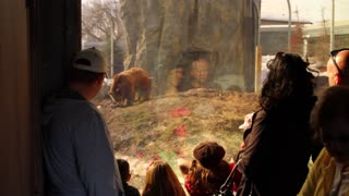 people watching a grissly bear at the zoo