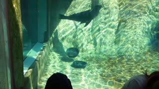 people watching the seals in aquarium in the zoo