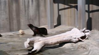 playful seals in an aquarium