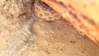 Poke a rattlesnake with a stick