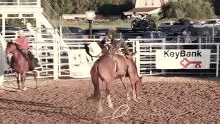 Rodeo bareback ride with cowboy