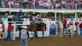 Rodeo bronc ride cowboy