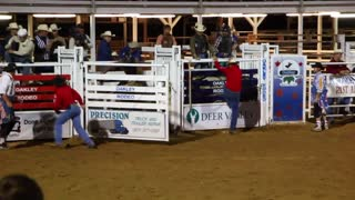 Rodeo bull and cowboy 2