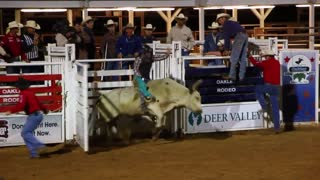 Rodeo bull and cowboy 3