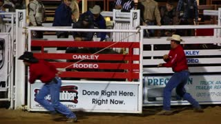 Rodeo Bull and Cowboy