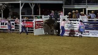 Rodeo Bull Riding Slow Motion