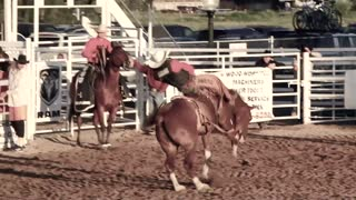 Rodeo cowboy riding bucking horse