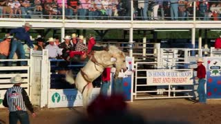 Rodeo horse going crazy with cowboy