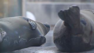 Seals at the zoo