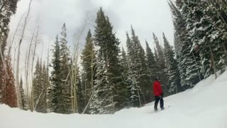 slow motion of skiing through forrest