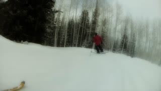 slow motion skiing through forrest