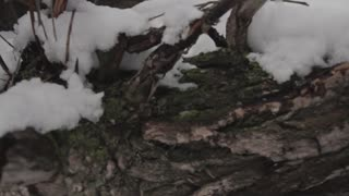 snow tree limb tree shot