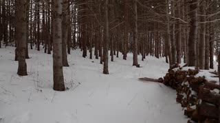 steadicam shot through snowy forest