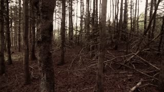 Steadicam walk through scary forest