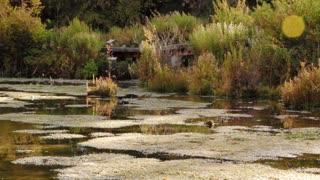 Swarms of flies over botanical garden swamp Dolly Shot