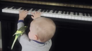 toddler playing the piano with his bird