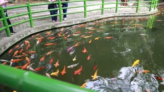 Tourists watching koi fish at the Giant Panda Breeding Research Center in Chengdu