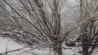 trees after a snowfall