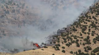 Trees Burning on Mountain