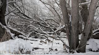 trees in forrest after snowfall