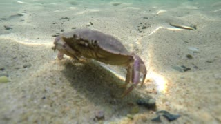Underwater shot of a cool crab on the sea floor bottom